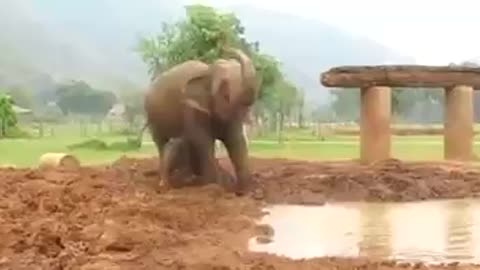 Naughty little elephant