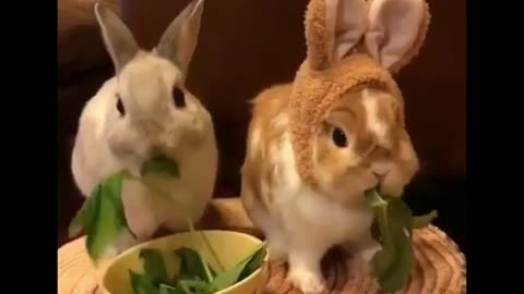 2 Rabbits Eat watercress