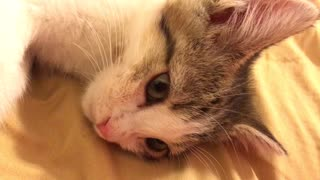 kitty cute channel - Video