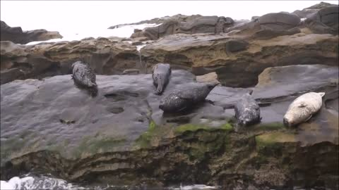 Funny: Seals Hanging on for Dear Life