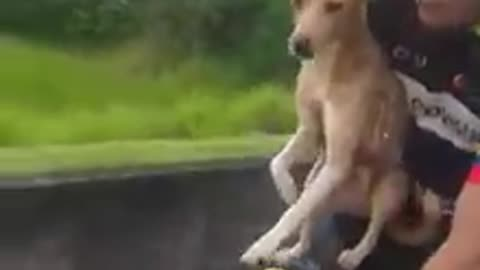 Hero Cyclist Scoops Up Abandoned Puppy, Brings Him Along For The Ride