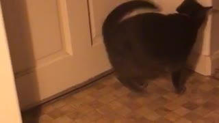 Cat does a front flip - Video