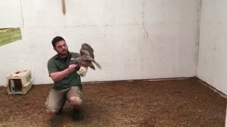 My friend is rasing OWL in his house - Video