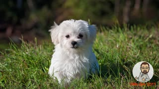 Most Adorable Puppies Video: Start Your Day With Cute Puppies Just Being Cute!