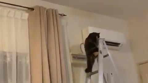 High Climbing Kitty Causes Chaos