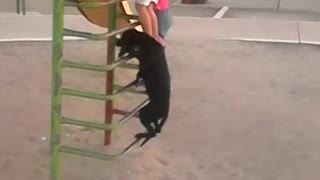 Dog in Mexico climbs ladder to go down slide - Video