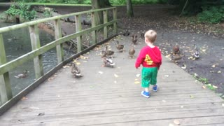 Feeding the hungry ducks - Video