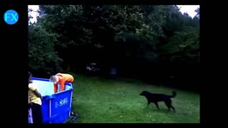 Funny Dogs Video Compilation  2016 - Video