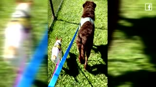 2 Dogs Who Refuse To Be Separated After Owner Dumps Them In Shelter Get Adopted Together - Video