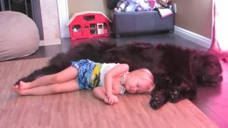 Little girl and her Newfoundland enjoy nap time