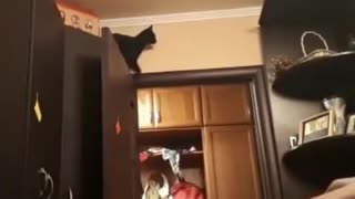 Cat jumping and trying to hold on  - Video