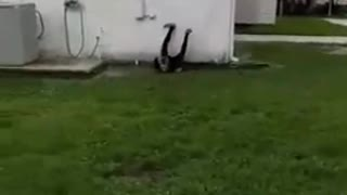 Guy runs at shed building trying to do back flip but slips on grass  - Video