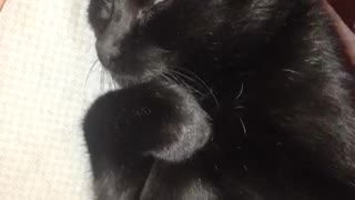 Black cat laying down  - Video