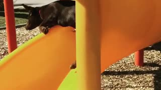 Black lab yellow slide fail - Video