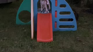 Happy Taffi on her slide