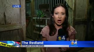 Owner Heartbroken After Show Horse Stolen - Video