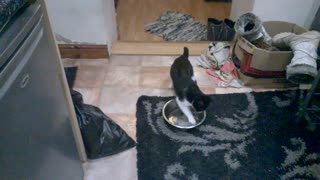 Kitten plays in drinking water bowl - Video