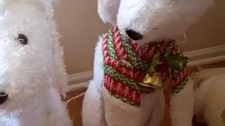 White dog standing still with dog props  - Video