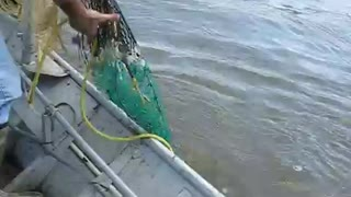 catch the net fishing  - Video