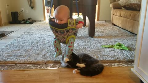 Cat Finds a New Favorite Toy