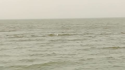 White Birds Swim On Qarun Lake Water Surface