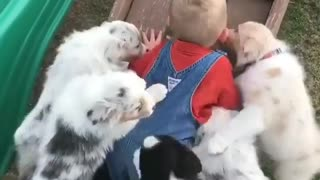 Little Boy Wins The Climbing Game Competing Against Adorable Puppies