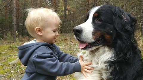 Little boy shares his hat and hugs with a huge Bernese Mountain Dog