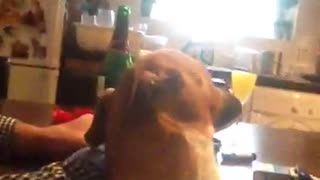 Jack Russell singing - Video