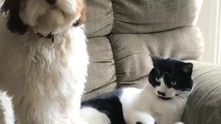 Dog and cat on rocking chair