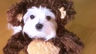 White dog in brown bear costume