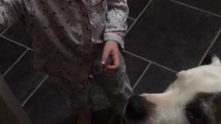 Adorable Little girl feeds her dog