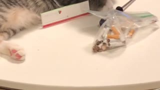 Grey cat sits on table near cigarettes
