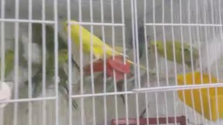 parrots in different color - Video