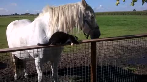 Horse And Cat Best Friends Is The Best Thing You'll See All Day