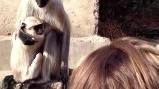 Monkey doesn't like it when you touch her tail! - Video