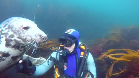 Incredibly friendly seal can't stop hugging scuba diver