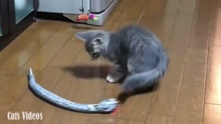 A Cat Afraid of a Snake Game in A Very Funny Way