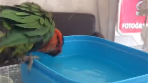 My Parrot is Take a Shower