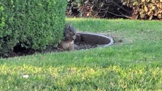 Squirrel in the Wild 05