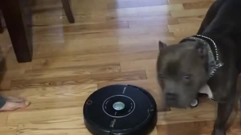 Roomba's Greatest Predator