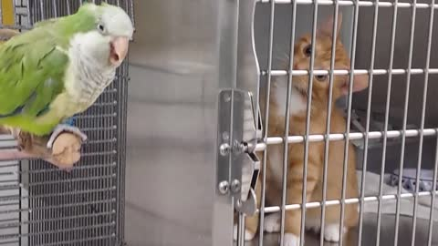 Adorable kitten can't take his eyes off a bird