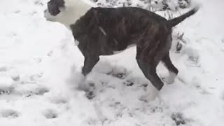 Dog having fun in snow