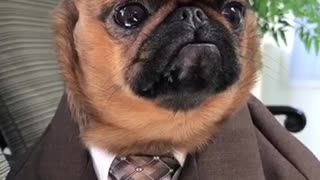 Just A Dog In A Suit - Video