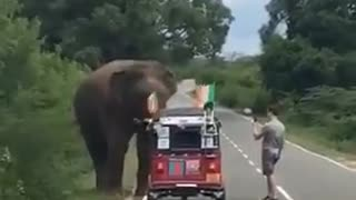 Irishman stops to feed a wild elephant in Sri Lanka