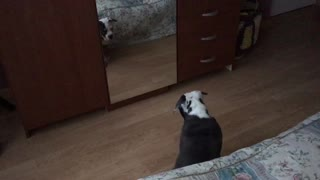 Who's that cute puppy in the mirror? - Video