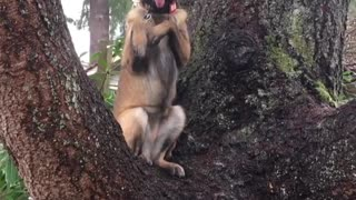 Dog or Squirrel? - Video