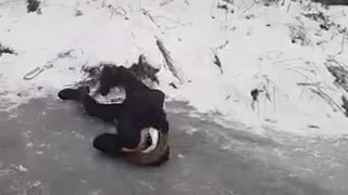 Black hat and jacket tries to slide on ice and falls on head - Video