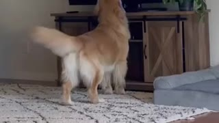 Most important dog funny video