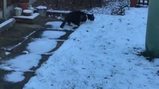 Cat Doesn't Know What To Make Of His First Experience With Snow - Video