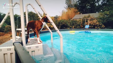 Bear jumping in the pool!